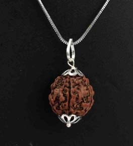 Rudraksha Pendant with Silver Coated Chain